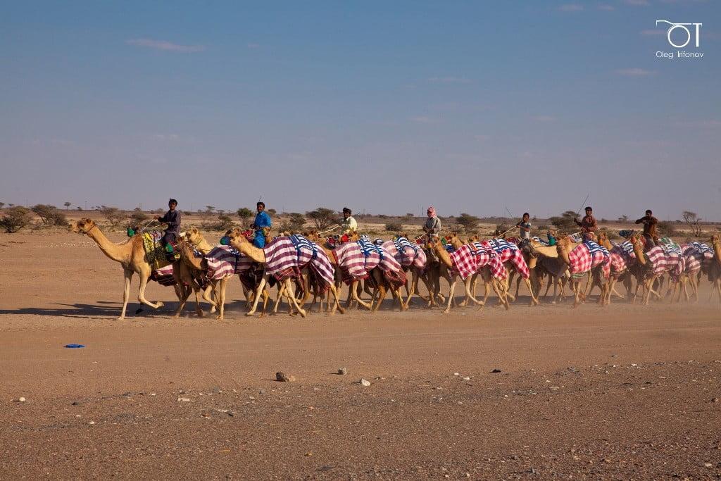 путешествие через пустыню (2)