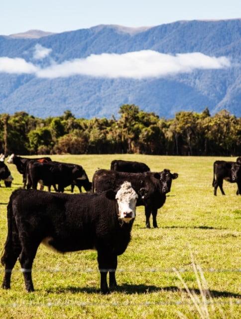 Новая Зеландия фото_новая зеландия сейчас